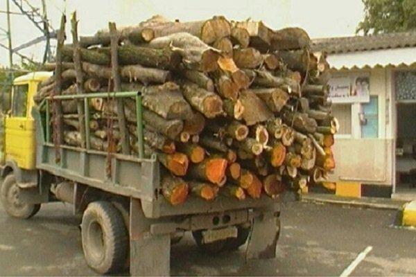 ۹۴ اصله انواع چوب قاچاق در شهرستان شفت کشف و ضبط شد