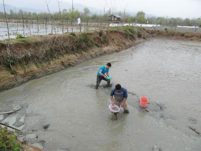 رها سازی بیش از هزار قطعه انواع بچه ماهی در رودخانه شکرپس املش