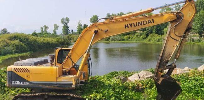 جمع آوری سنبل آبی از رودخانههای لنگرود