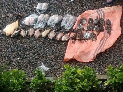جمع آوری پرندگان شکار شده از بازار لنگرود