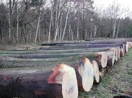 کشف چوب قاچاق در صومعه سرا