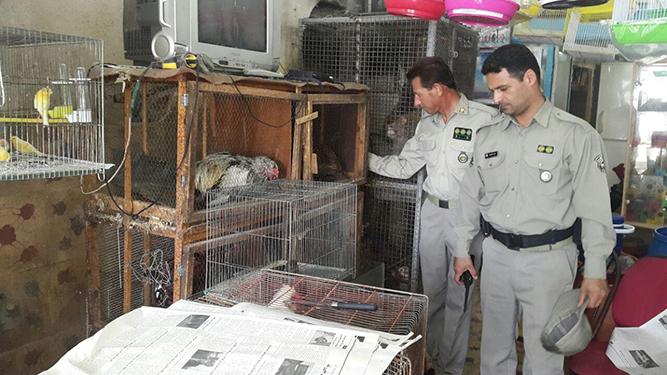 پایش مراکز خرید و فروش پرندگان وحشی و حیوانات توسط پرسنل یگان حفاظت محیط زیست استان گیلان