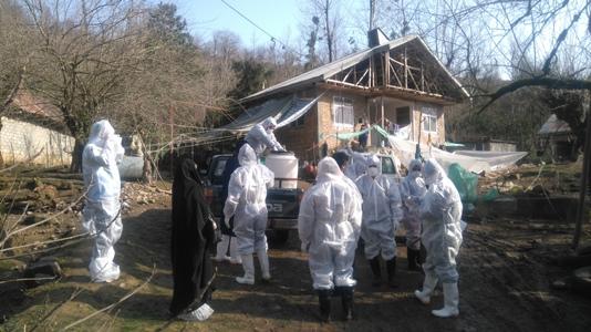 طیور خانگی روستای شولم فومن به علت مشکوک بودن به آنفلوآنزا جمع آوری شدند .