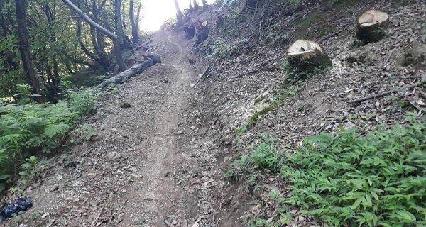 رفع تصرف ۶۲۰۰ متر مربع از اراضی ملی لنگرود/ شناسایی عاملین قطع درختان جنگلی